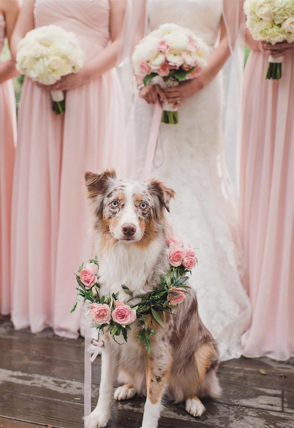 cute bridesmaids and dog wedding photo ideas