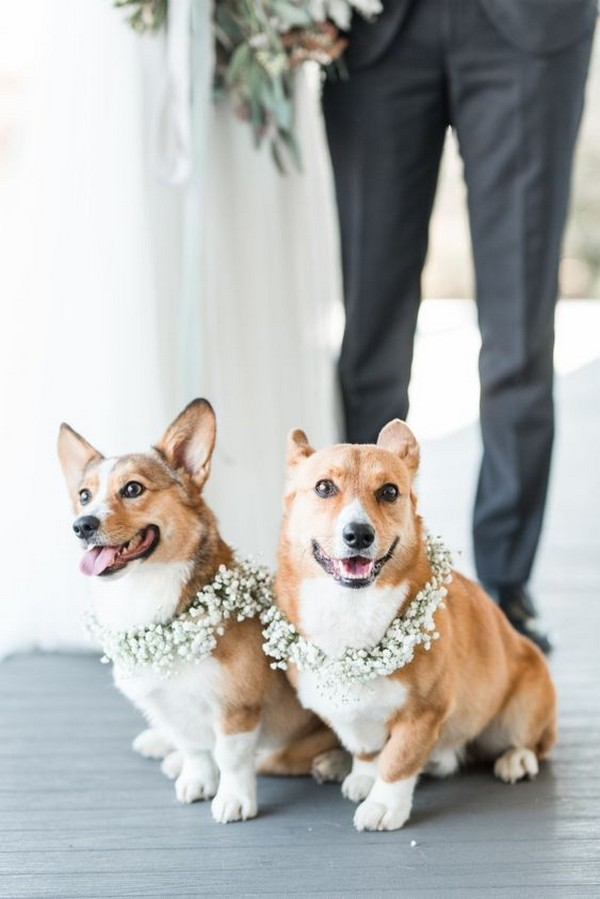 dogs at your wedding with baby's breath wedding halos