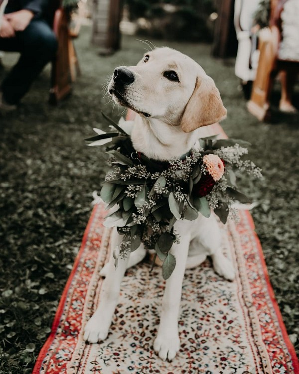 18 Precious Wedding Photo Ideas With Your Dogs