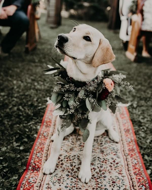 dogs wedding photo ideas