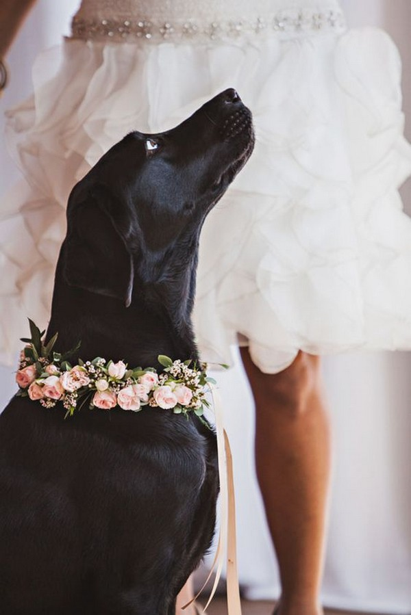 lovely wedding photo ideas with dog