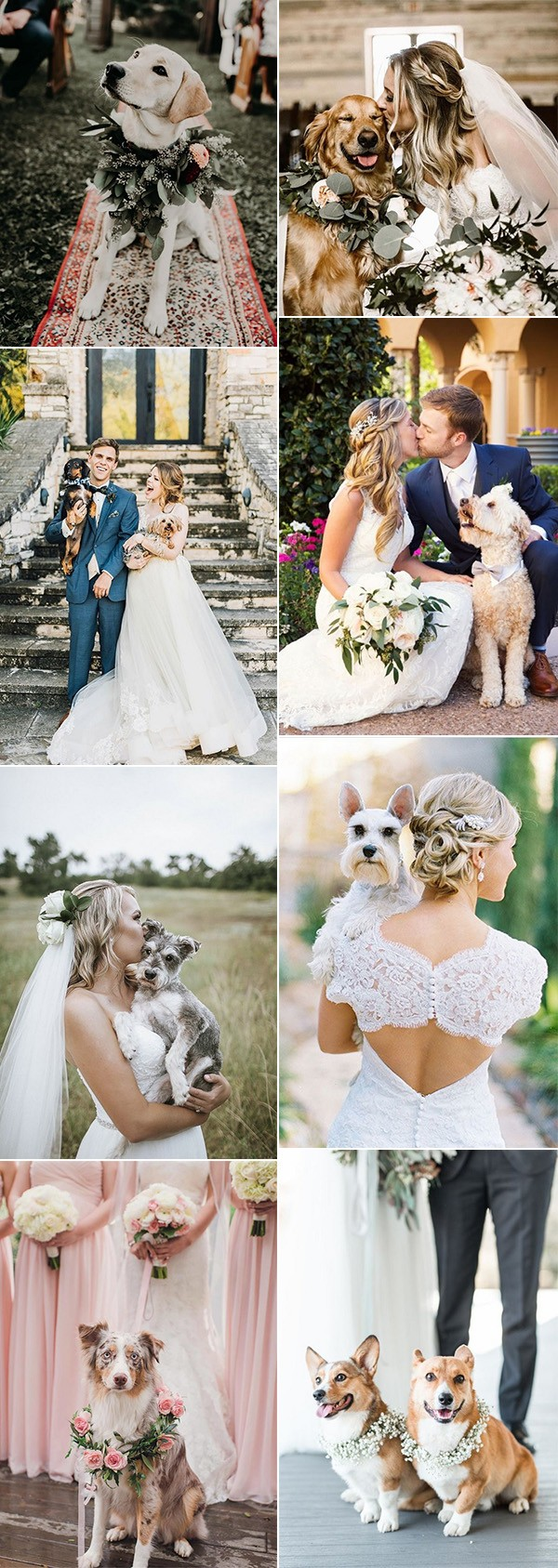 precious wedding photos with dogs