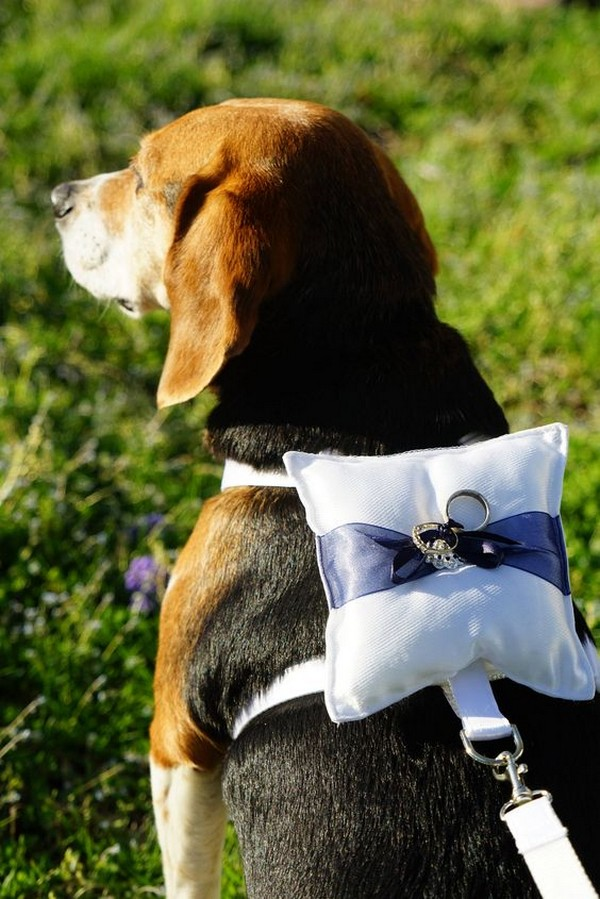 ring bearer dog wedding photo ideas