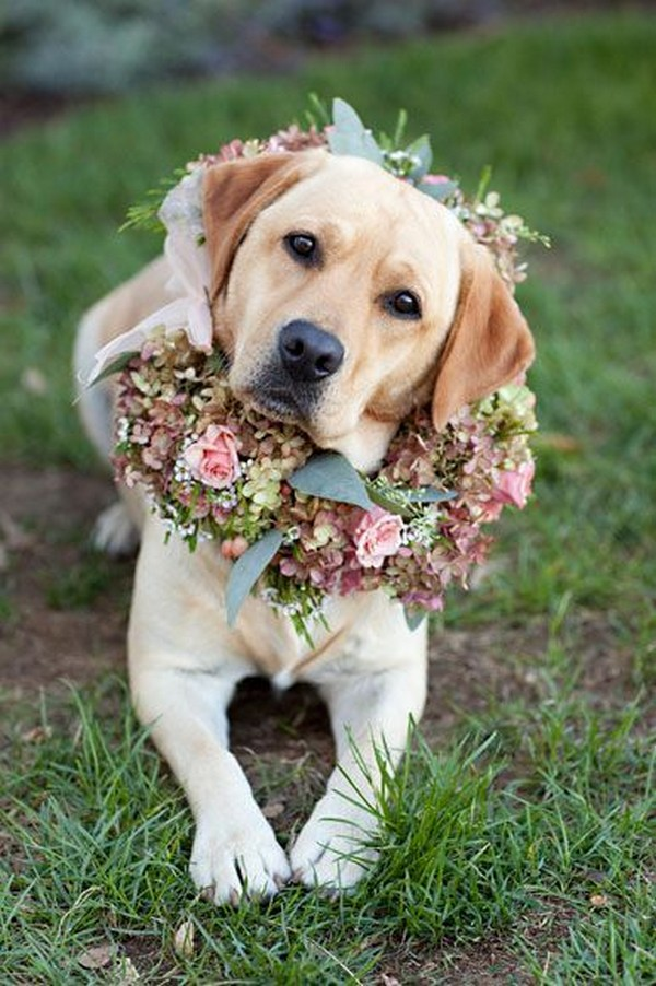 wedding photo ideas including dog with floral arrangement