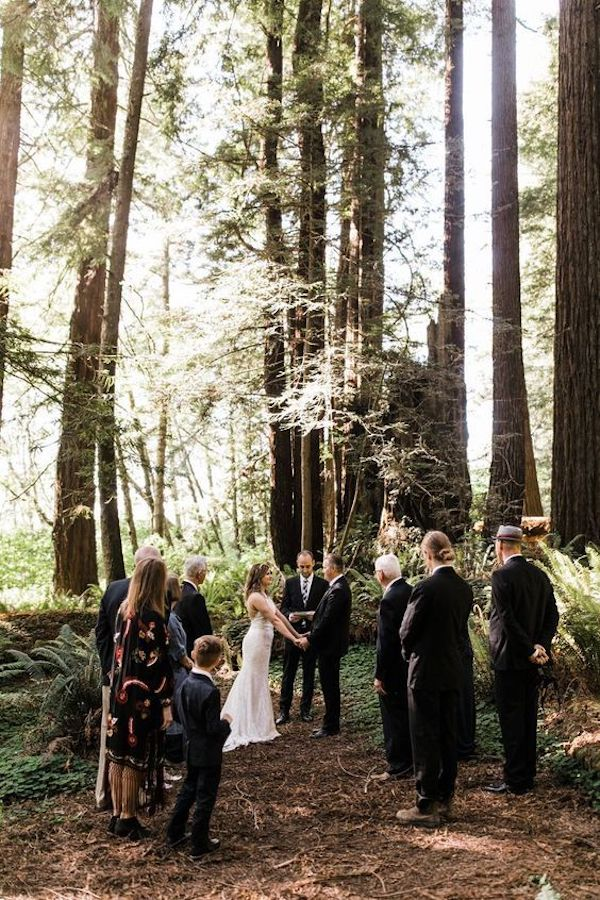 intimate wedding ceremony in the redwood forest